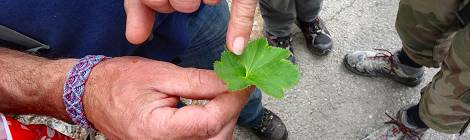 Actualités : week-end découvertes plantes sauvages au chalet du germas